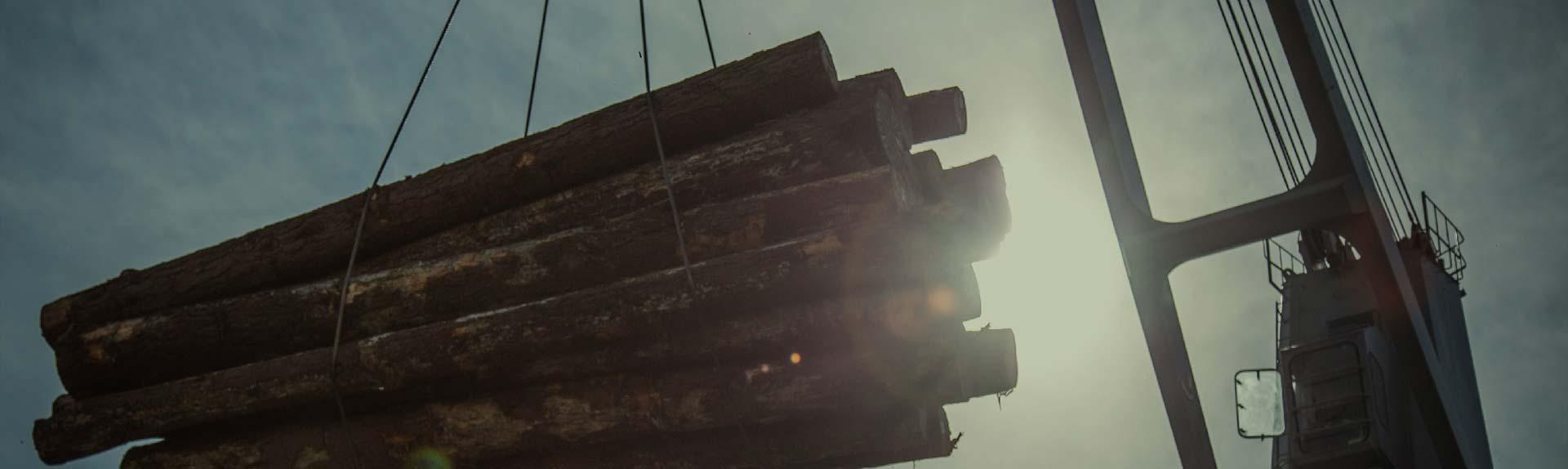 grúa descargando troncos en un camión